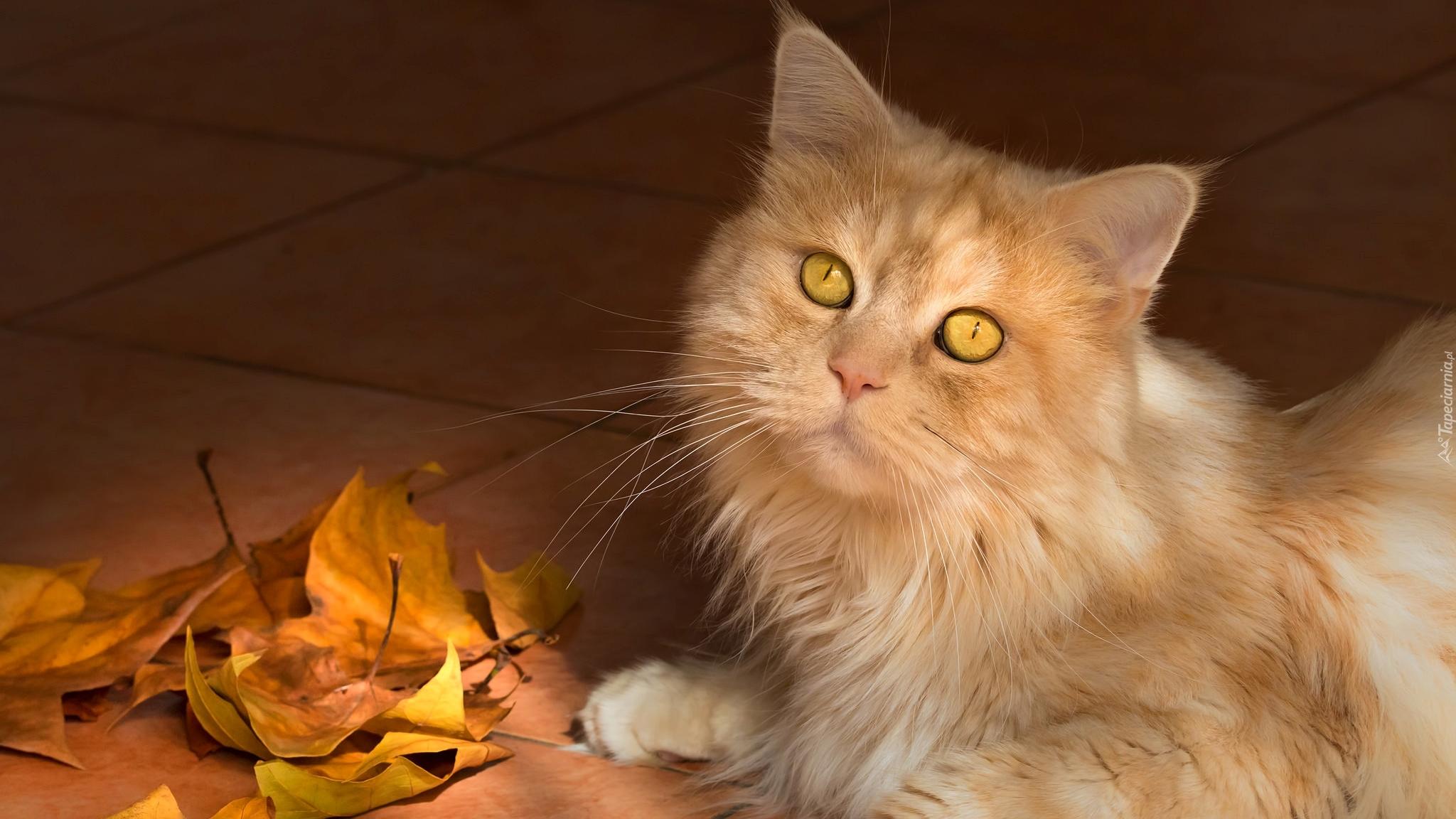 Rudy Kot Obok Liści