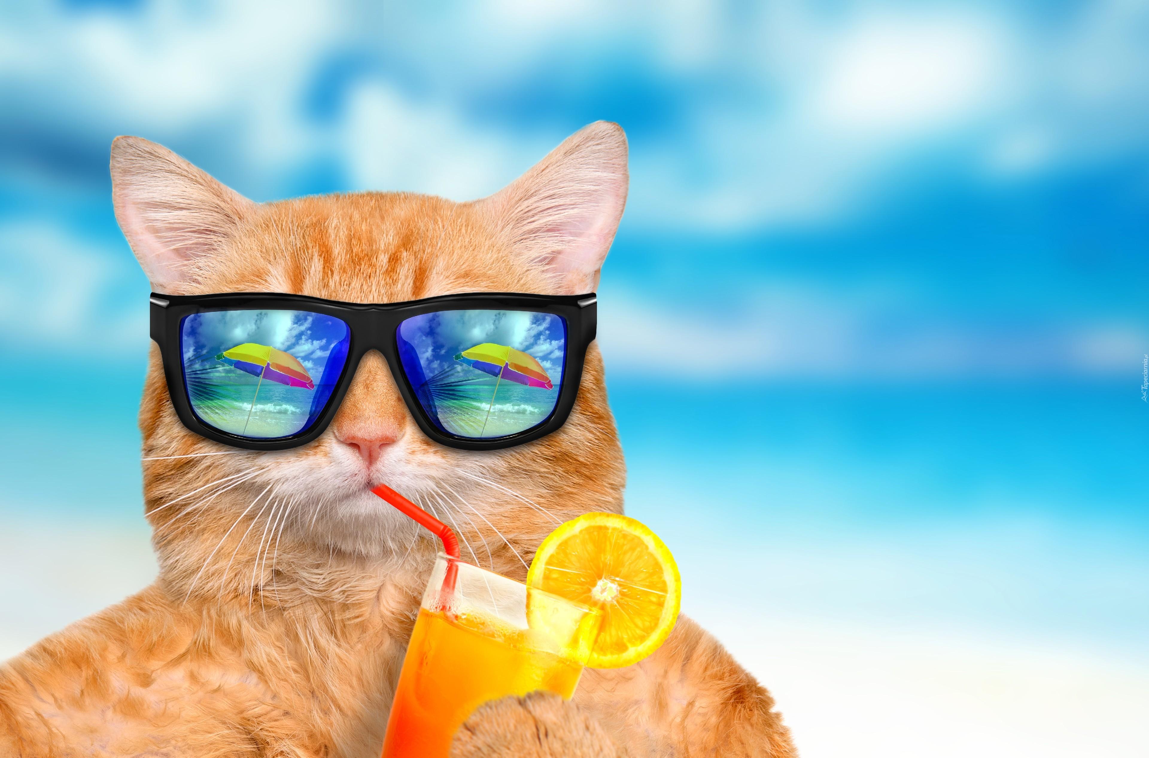 Rudy Kot W Okularach Przeciwsłonecznych Pije Sok Pomarańczowy