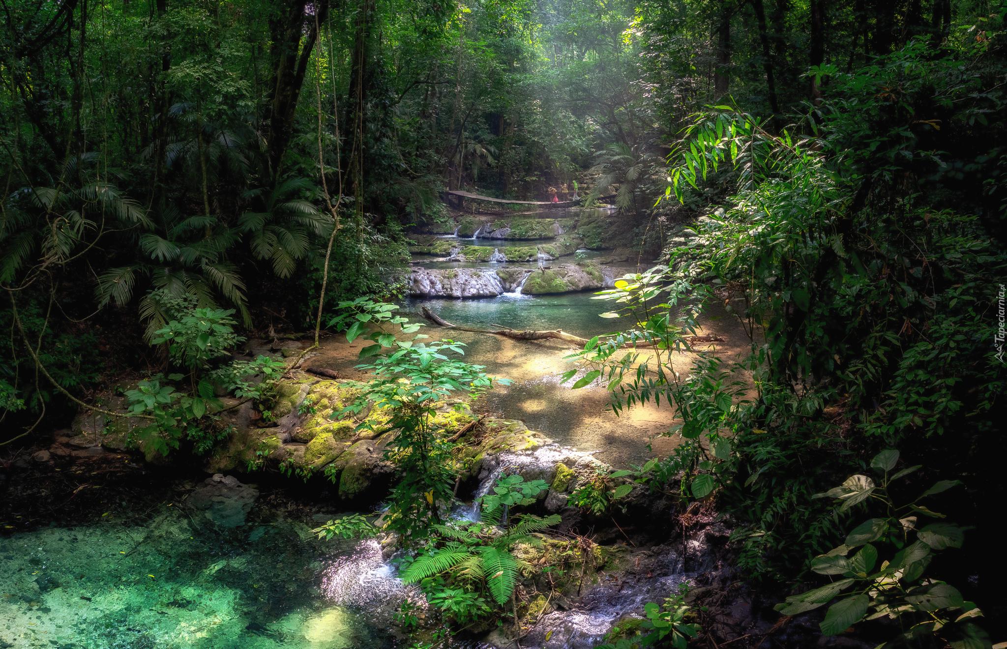 tapeta-rzeka-w-dzungli.jpg