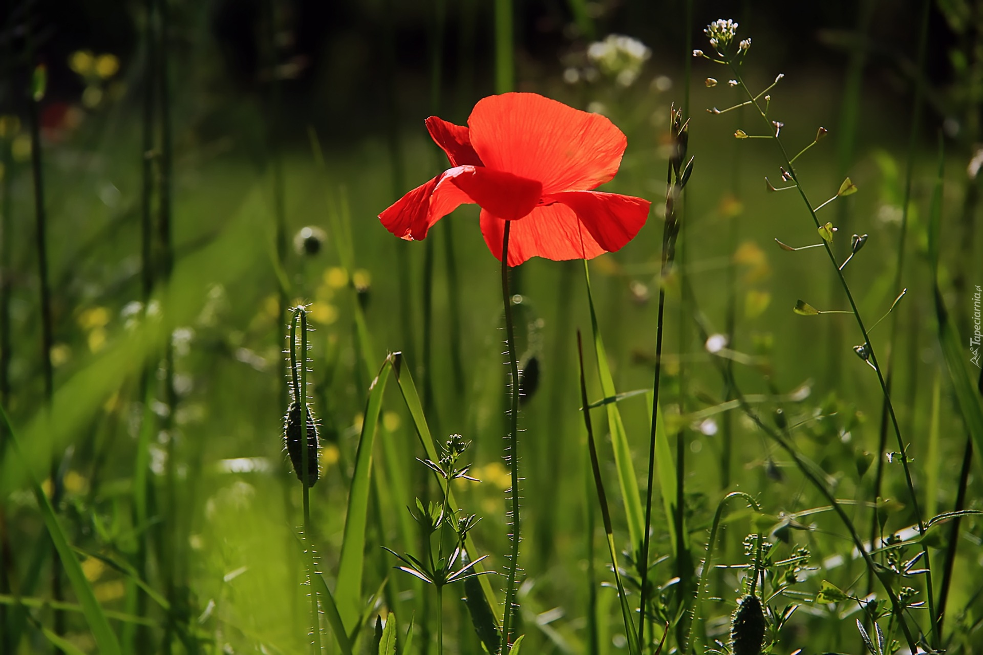 Цвет мочи при приеме нитроксолина