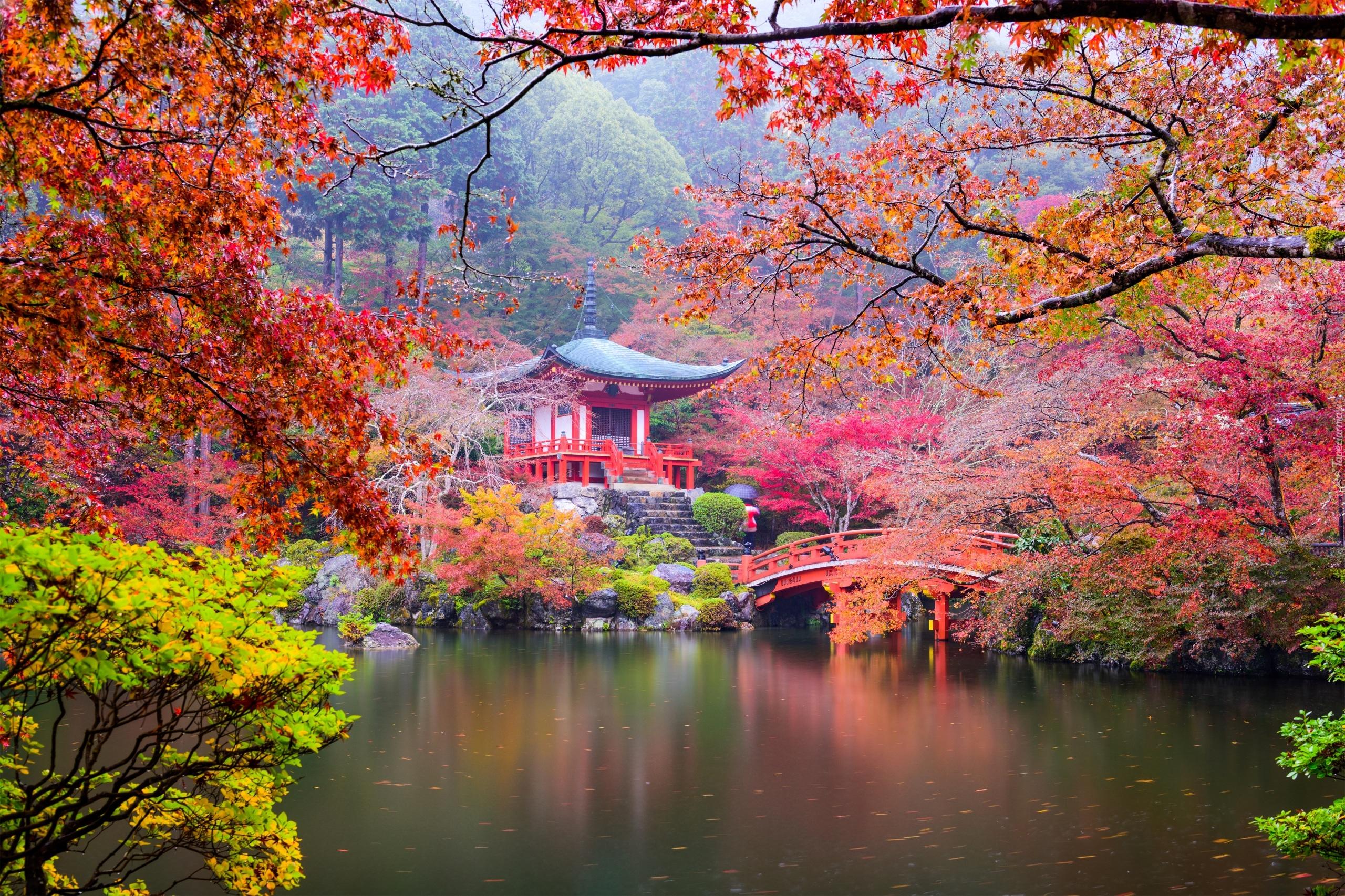 Świątynia Benten-dō w buddyjskim kompleksie świątynnym Daigo-ji w KiotoMiejsca»Budowle»ŚwiątynieMiejsca»Kontynenty-Państwa»JaponiaKrajobrazy»JesieńKrajobrazy»StawyPrzyroda»Rośliny»Drzewa