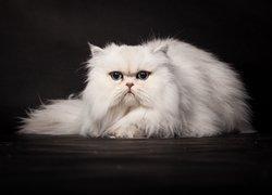 Tapety Kot Perski Biały