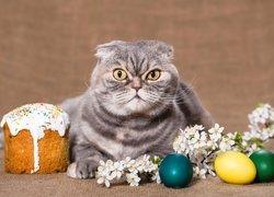 Kot szkocki zwisłouchy, Pisanki, Babka wielkanocna, Wielkanoc