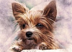 Yorkshire terrier w grafice paintography