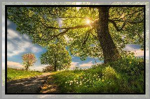 Drzewa, Droga, Kwiaty, Promienie słońca, Wiosna