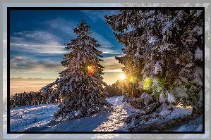 Zima, Drzewa, Świerki, Śnieg, Niebo, Chmury, Promienie, Zachód słońca